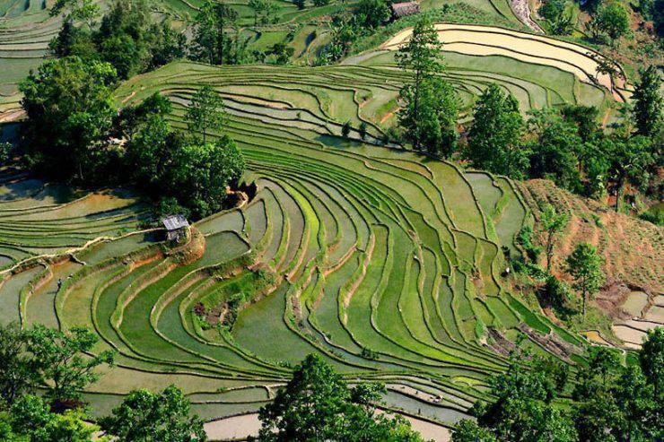 Tarasy ryżowe 6