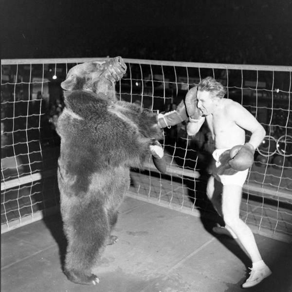 Boks z niedźwiedziem. 1
