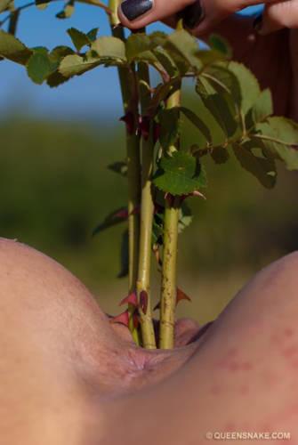 Crimson Thorns - Queensnake.com (2011/ HD 1080p)