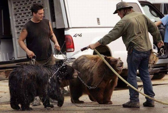 Niedźwiedzie 39