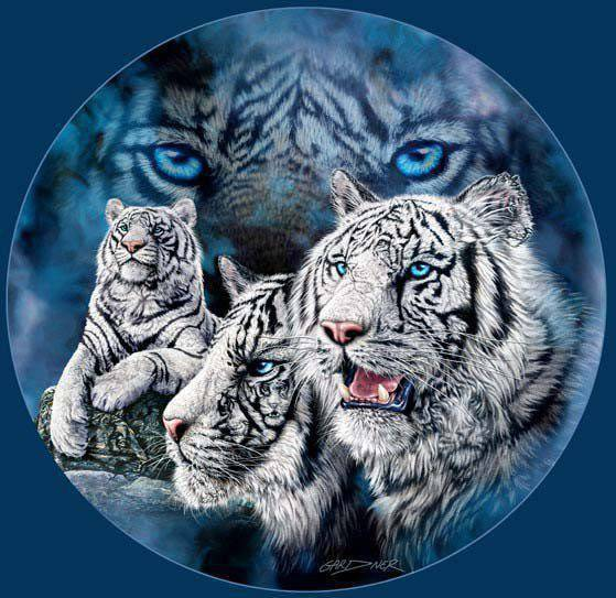 Tygrysy 14