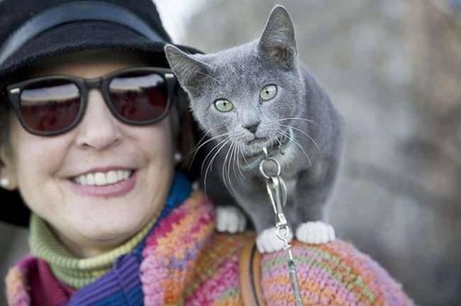 Koty na spacerze 15