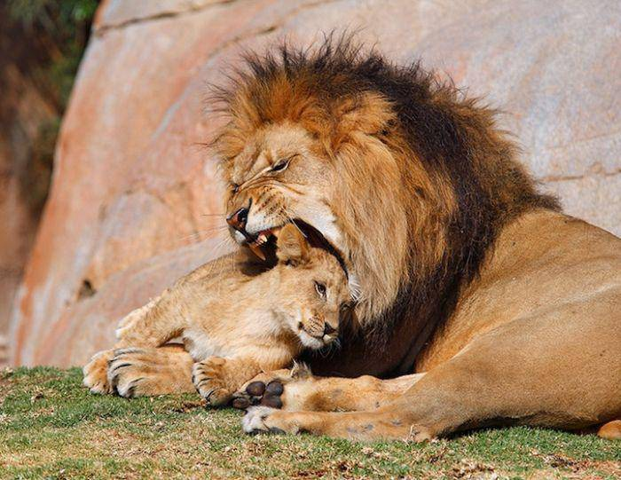 Stop klatka: zwierzęta 11