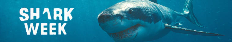 Shark Week 2013 Shark After Dark LIVE Night 2 480p HDTV x264-mSD