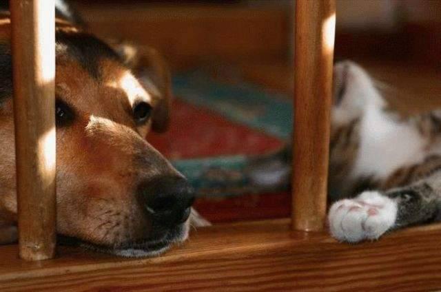 Kot i pies w jednym domu ? 9