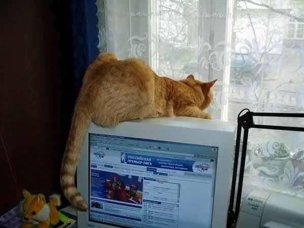 Koty i PC 13