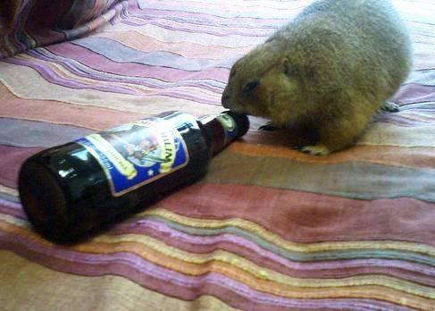Zwierzaki i alkohol 6