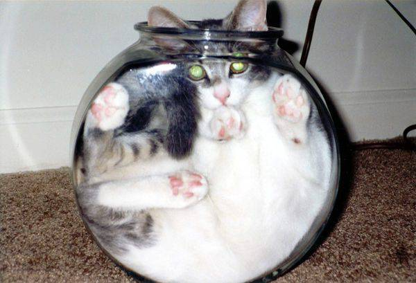 Koty, kociaki i kocury 29