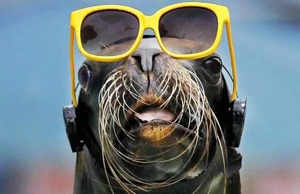 Śmieszne zdjęcia zwierząt #6 36