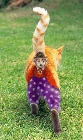 Śmieszne zdjęcia kotów #2 32