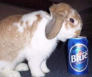 Zwierzaki i alkohol 19