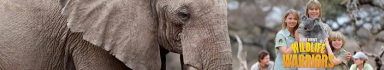 Steve Irwins Wildlife Warriors S01E13 HDTV XviD-AFG