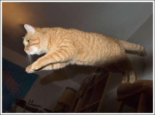 Kocie skoki 19