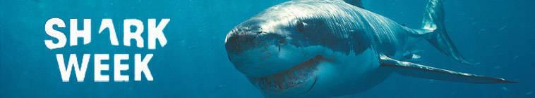Shark Week 2014 Monster Hammerhead HDTV XviD-AFG