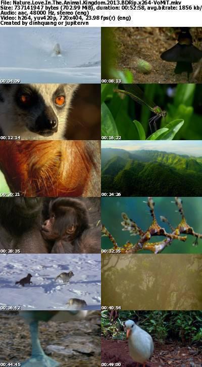 PBS - NATURE: Love in the Animal Kingdom (2013) BDRip x264-VoMiT