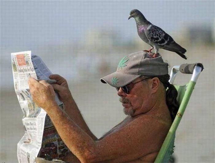 Ptaki atakują 34