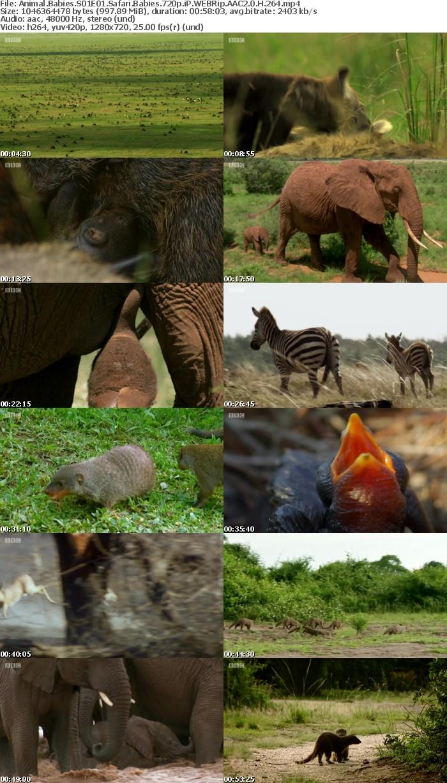 Animal Babies S01E01 Safari Babies 720p iP WEBRip AAC2 0 H 264