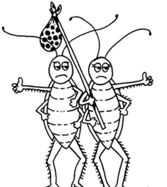 Como ahuyentar cucarachas, facil y economico