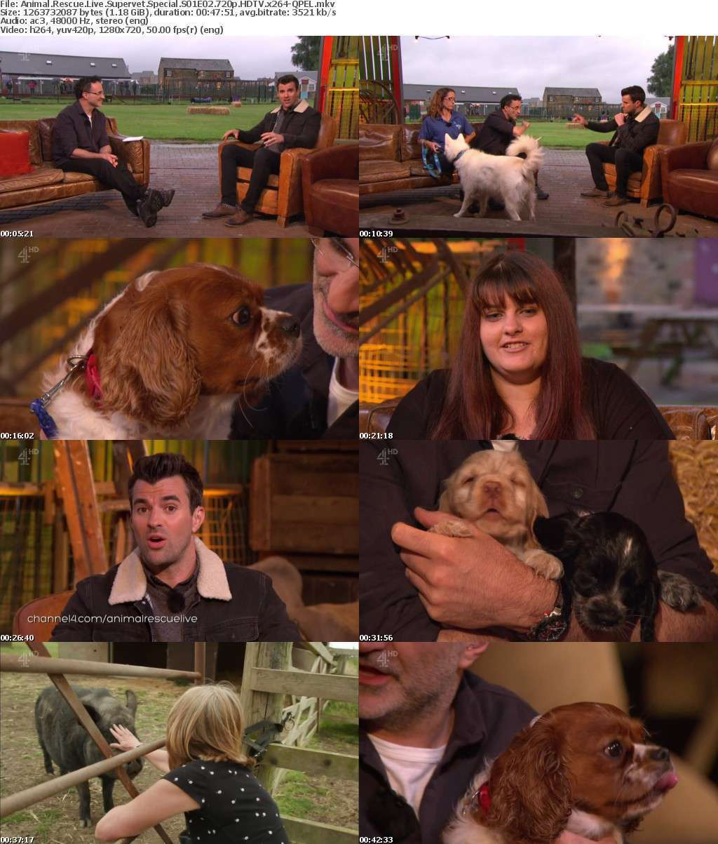 Animal Rescue Live Supervet Special S01E02 720p HDTV x264-QPEL