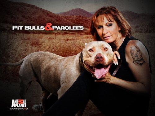 Pit Bulls and Parolees S12E06 A Puppys Journey Home 720p WEB x264-CAFFEiNE