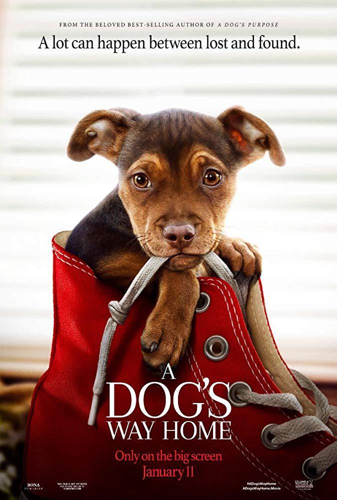 A Dogs Way Home 2019 720p HDRip BLURRED AC3 X264-CMRG