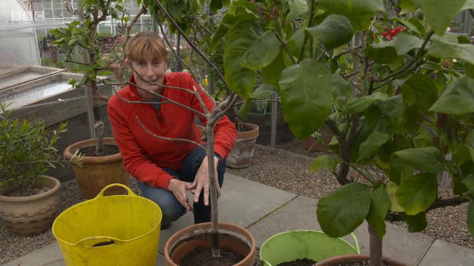 The Beechgrove Garden S41E04 Episode 4 540p iP WEB-DL AAC2 0 H 264-SOIL
