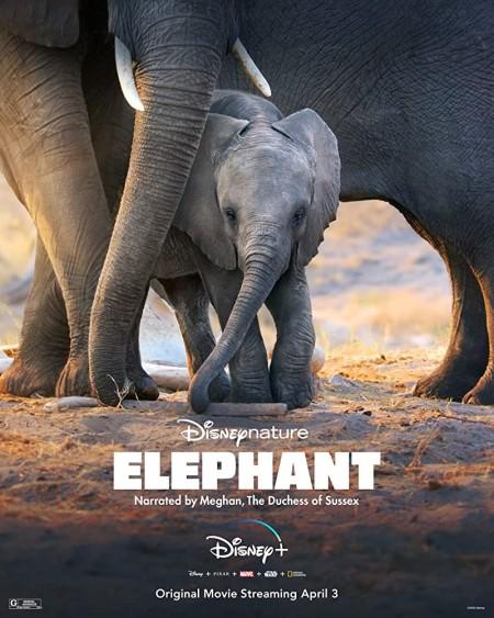 Elephant 2020 720p WEBRip 800MB x264-GalaxyRG