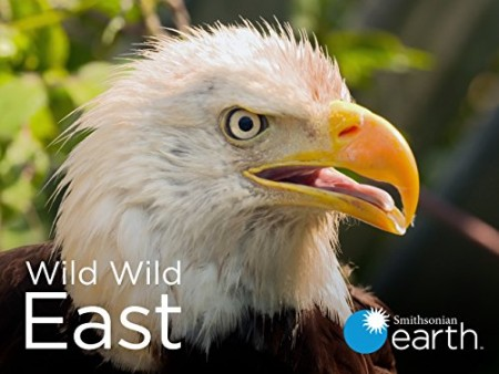 Wild Wild East S01E01 Foxes 720p WEB h264-CAFFEiNE