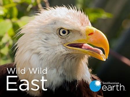 Wild Wild East S01E12 Seasons WEB h264-CAFFEiNE